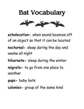 Bat Vocabulary Words