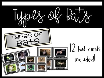 Bat Week {bat facts, compare and contrast, types of bats, life cycle}