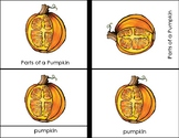 Parts of a Pumpkin and Bat Four Part Halloween Cards