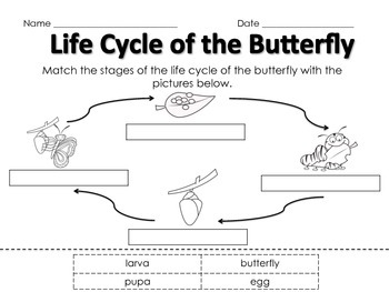 Life Cycle of the Butterfly Matching
