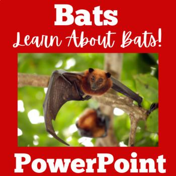 Bats PowerPoint | Bats and Caves | Bats Activity