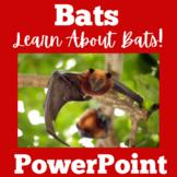 Bats | PowerPoint Activity | Kindergarten 1st 2nd 3rd 4th