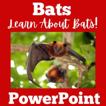 Bats PowerPoint
