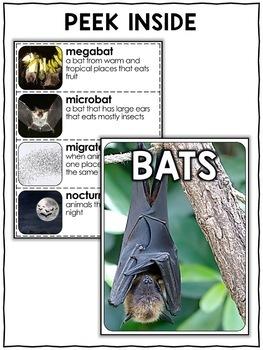 Nonfiction Unit - Bat Activities