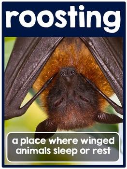 Bats {A Complete Non-fiction Bat Resource}
