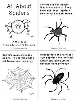 Spiders Mini Book