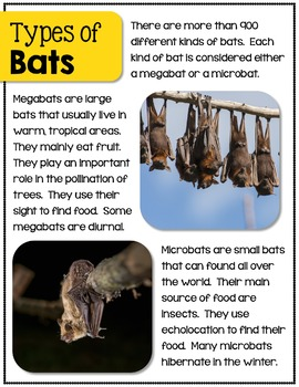 Bats- A Nonfiction Unit