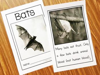 Bats Kindergarten Book and Activities