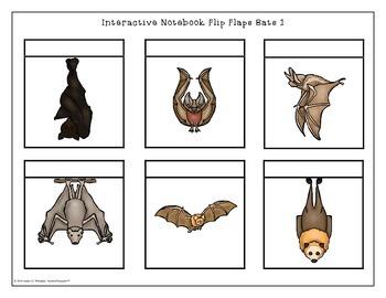 Bats All About Bats Interactive Research Activities