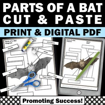 Bats and Stellaluna, Halloween Activities, Science Cut and Paste Activity