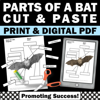 Parts of a Bat, Halloween Science Cut and Paste Worksheets, Stellaluna Book