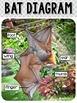 Bats {Bats Unit Non-Fiction}