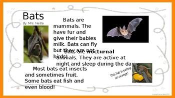 Bats Close Read