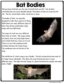Bats! Close Reading & More- Differentiated