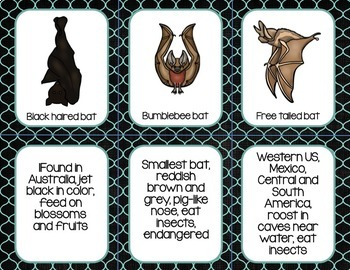 BATS: NONFICTION AND SCIENCE Research Activities With Interactive Slideshow