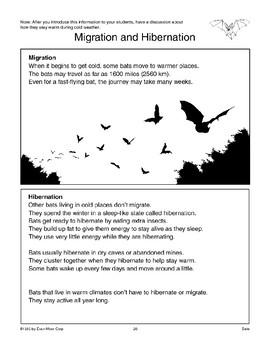 Bats: Four Pages of Information