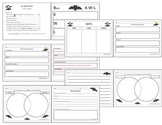 Bats Graphic Organizers, Writing Paper, Research Paper Com