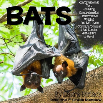 Bats ~ Informative Writing, Informational Text, and More!