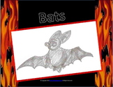 Bats: Interactive Notebook & Math Extension