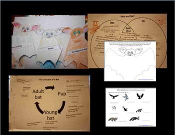 Bats: Interactive Notebook & Math Extension