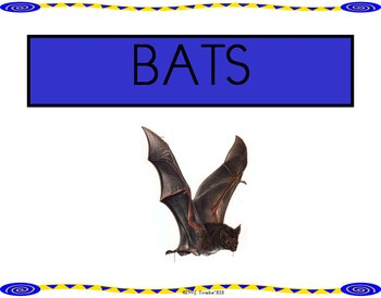 Bats:  Learning Center Sign