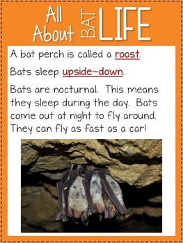 Bats {Nonfiction and Literacy Unit}