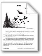 Bats/Los murciélagos