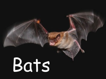 """Bats Nonfiction PowerPoint """"Book"""" for Late First Through Fourth Grades"""