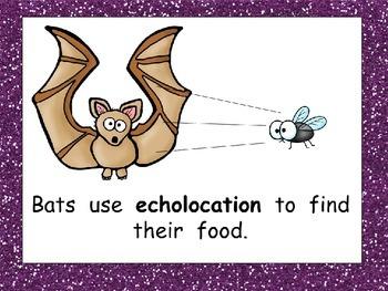 Bats- Nonfiction Shared Reading- Level C Kindergarten
