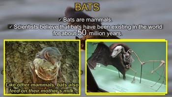 Bats - PowerPoint