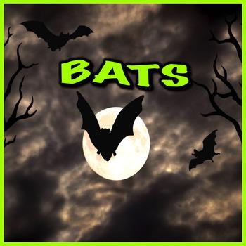 Bats - PowerPoint & Activities
