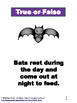 Bats Quiz and Answers