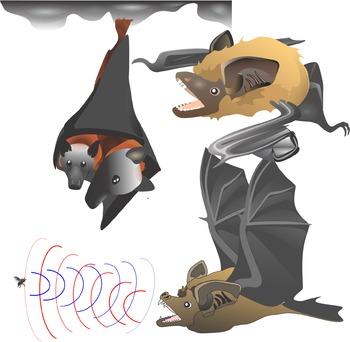 Bats Science Clip Art