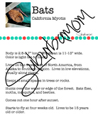 Bats - Science - Reading Comprehension- Writing