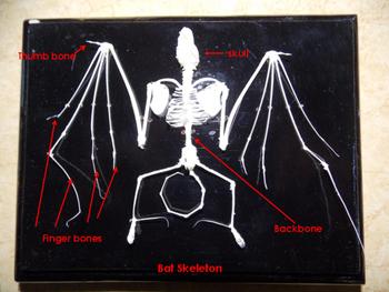 Bats! Spooky or Special?