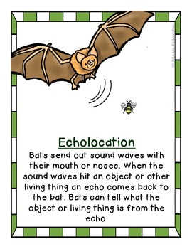 Bats: The Bat Pack Supplementary Set