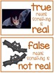 Bats: True or False