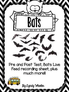 Bats Unit - bats, nocturnal animals, elementary science