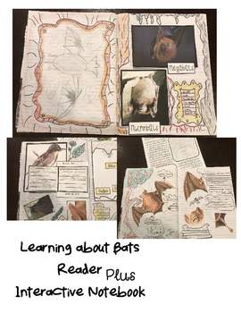 Bats Unit and Interactive Notebook