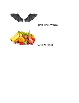 Speech Therapy-Special Education-Bats Vocabulary