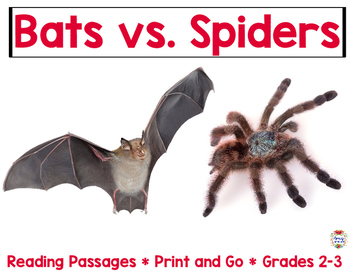 Bats Vs. Spiders: Who is the better hunter?