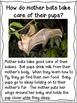 Bats an Informational Texts for Kindergarten & First Grade | Close Reading