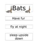 Bats and Birds Venn Diagram and more