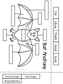 Bats and Owls Interactive Notebook Activities