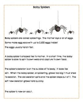 Bats and Spider Babies Comprehension Practice