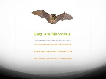 Bats are Mammals Powerpoint