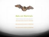 Bats are Mammals Powerpoint
