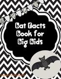Bats for Big Kids!