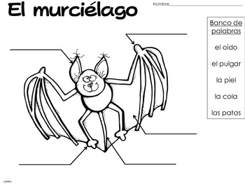 Bats in Spanish
