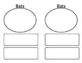 Bats- recording